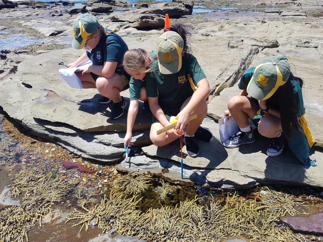 Students test water in rock pools